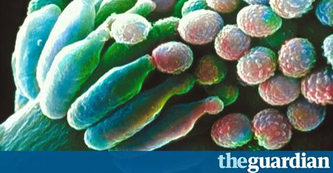 Article: Millions at risk as deadly fungal infections acquire drug resistance