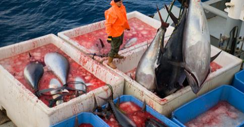 Article: Global Fisheries Are Collapsing