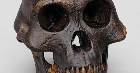 Article: Bone scans suggest early hominids spent significant time in trees