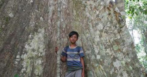Article: The Tribe on the Front Line in the Battle to Save Indonesia's Forests
