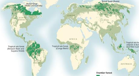 Article: The 'Family of 5' Primary Forests – A Snapshot of What Remains