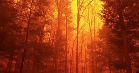 Article: Tennessee wildfires