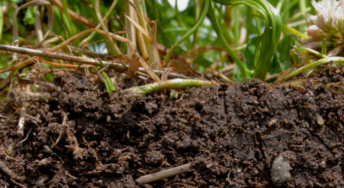 Article: Healthy soil is the real key to feeding the world