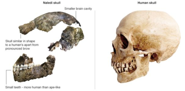 Article: Primitive human lived much more recently