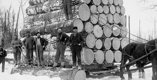 Article: First American settlers cut down millions of trees to change climate